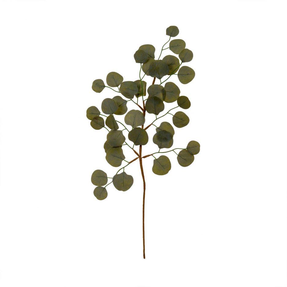 Branche eucalyptus