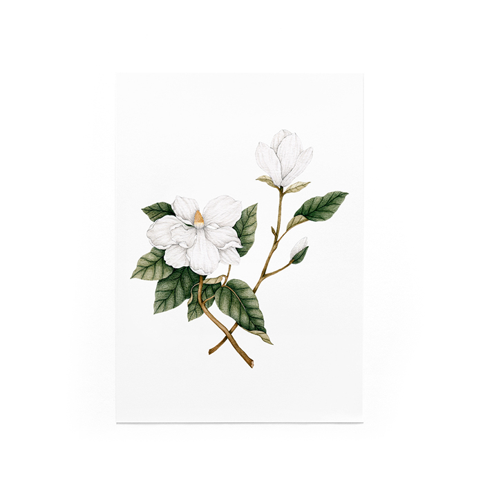Illustration Magnolia - 8 x 10