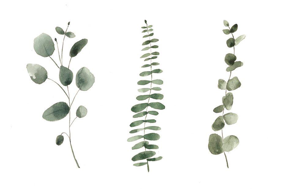 Illustration Trio eucalyptus