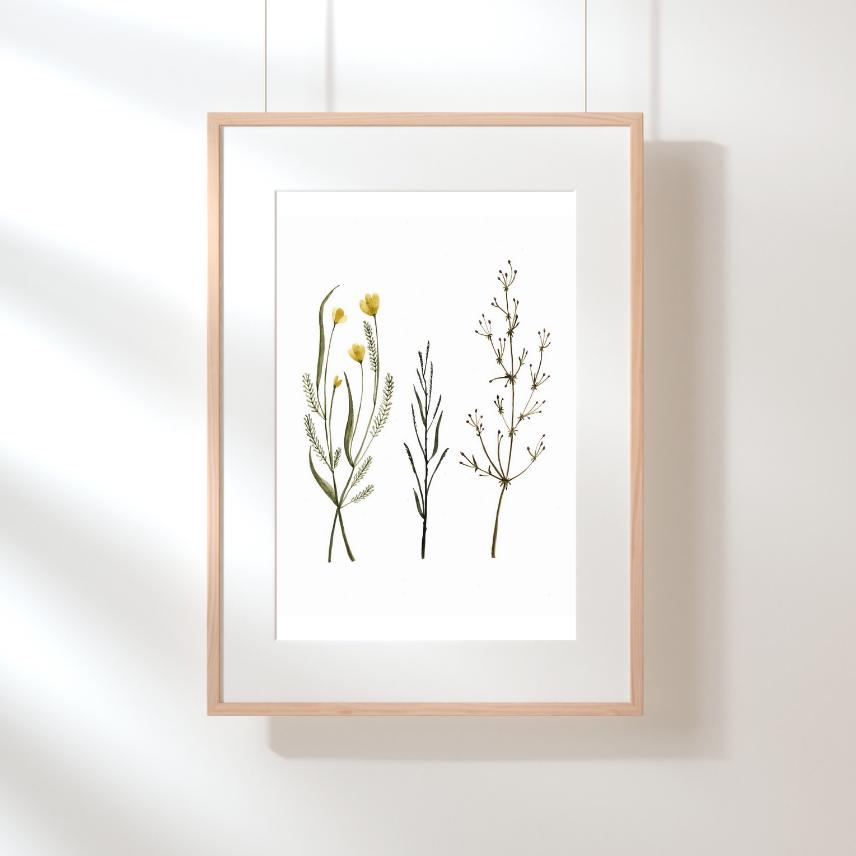 Illustration Herbes des champs